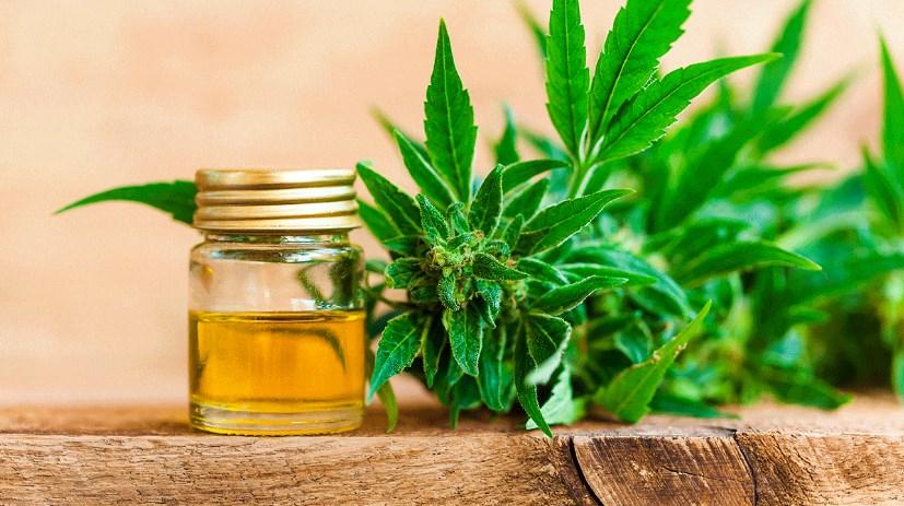 Conozca más sobre el aceite curalotodo